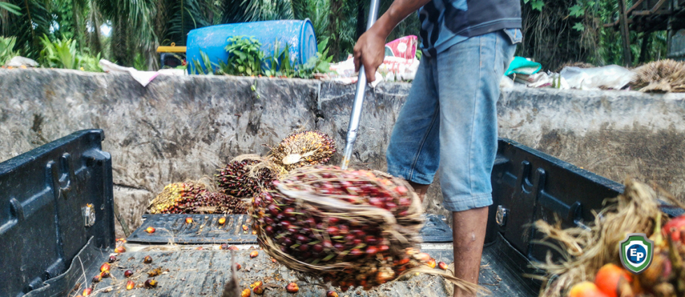 Cameroon's Palm Oil Exports