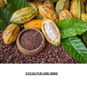 Cocoa and Other Agro Products